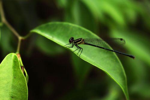 dragonflies green nature