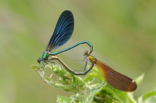 dragonflies bridesmaids coupling