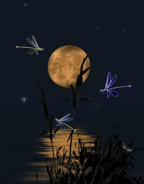 dragonflies dragonflies dance dance