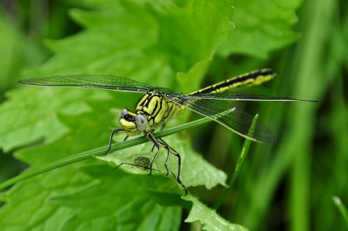 dragonfly insect water
