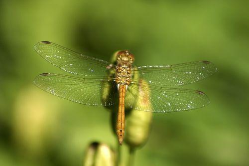 dragonfly jo boonstra groningen