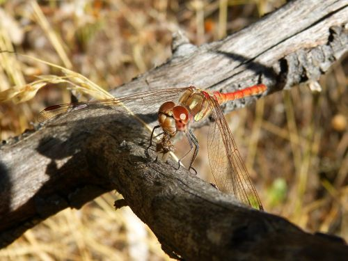 dragonfly winged insect branch