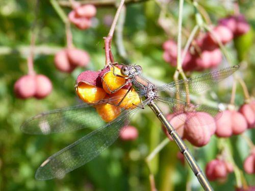 dragonfly bins bridesmaid female