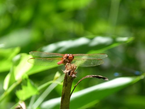 dragonfly nature rain forest
