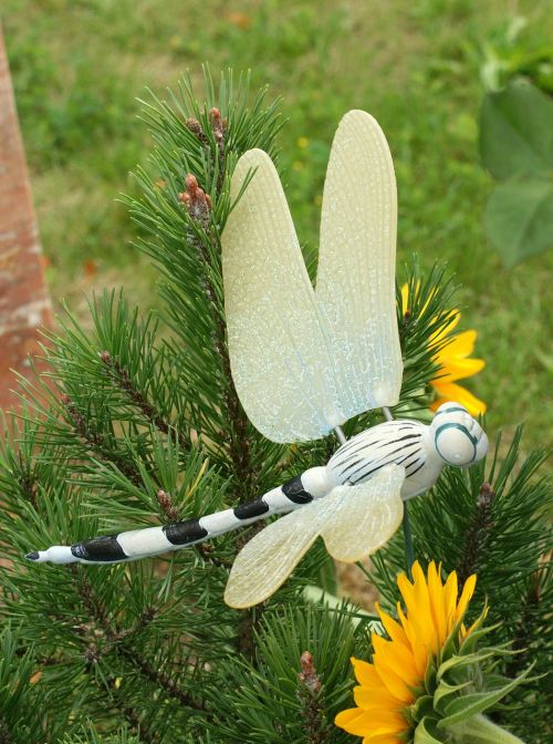 dragonfly contemplative cemetery