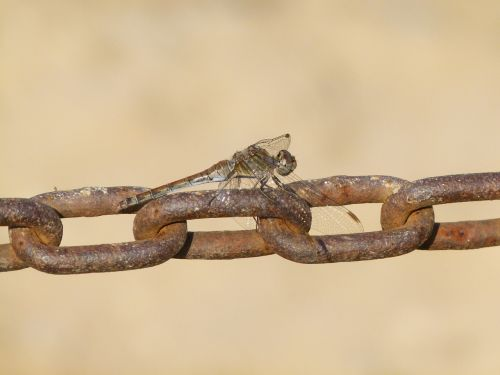 dragonfly string links