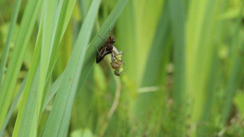 dragonfly close garden pond