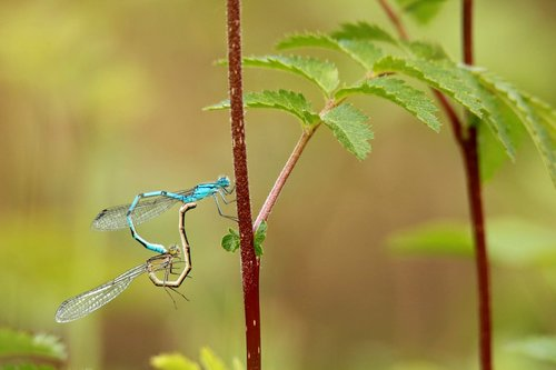 dragonfly  pairing  macro