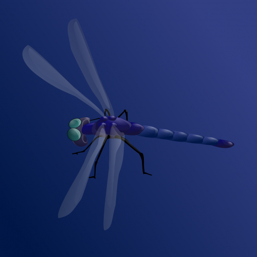 dragonfly insect darning needle