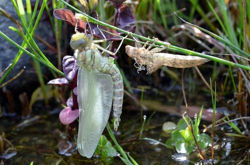 dragonfly birth vacuum sleeve