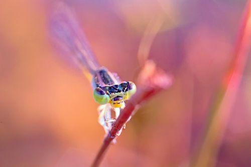 dragonfly damselfy kerala