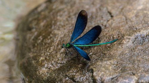 dragonfly china geopark