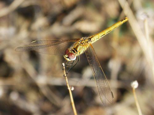 dragonfly wings beauty