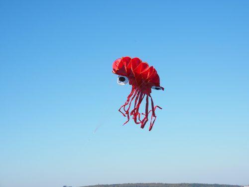 dragons octopus squid