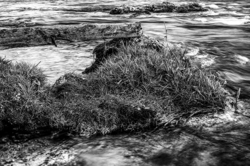dramatic water grass