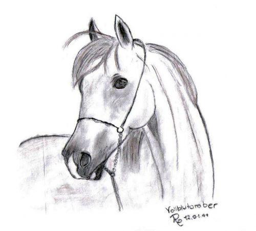 drawing image pony