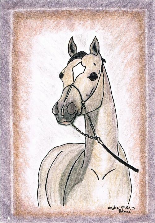 drawing painting horse