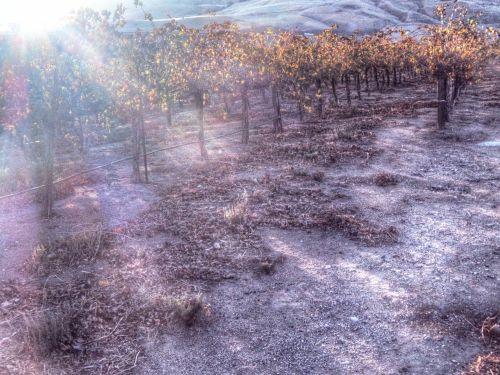 Dreamy Vineyards