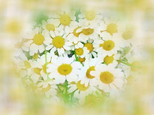 Dreamy Yellow Flowers