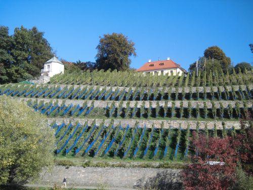 dresden autumn wine