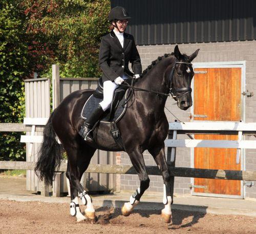 dressage equestrian horsewoman