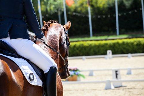 dressage  horses  equine