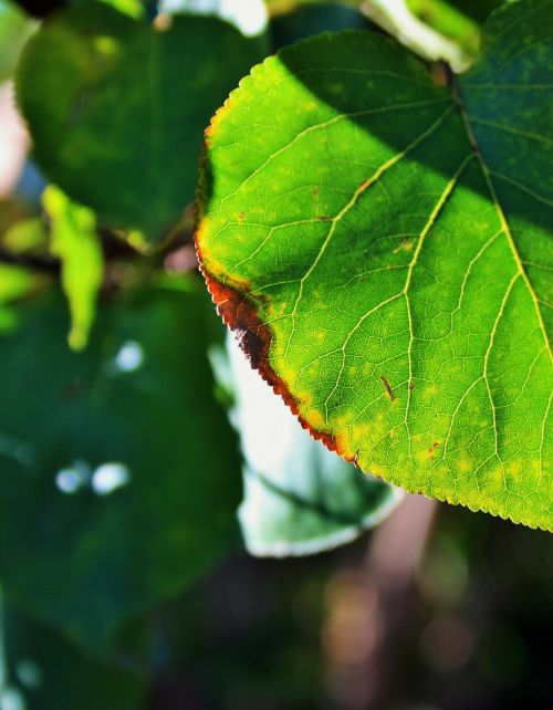 Dried Edge Of Leaf