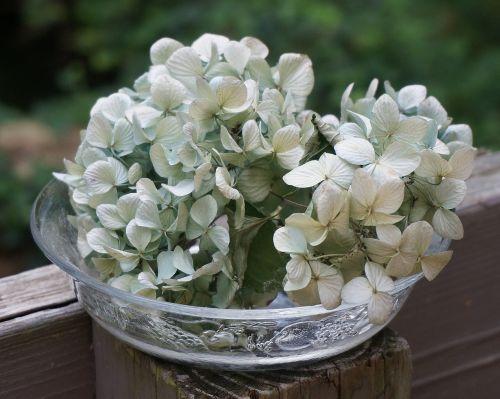 dried hydrangeas in glass bowl dried hydrangea flowers flowers