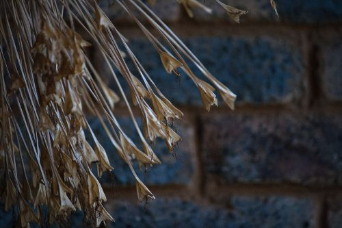 Dried Plant Material