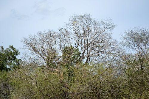dried trees dry sky