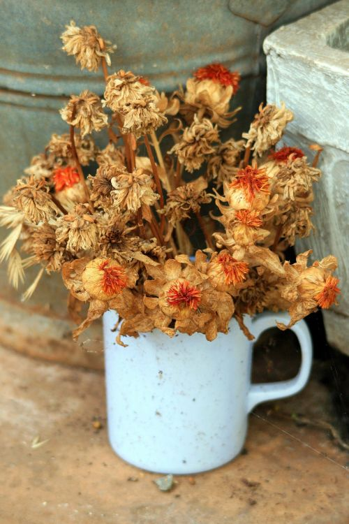 Dried Up Flowers