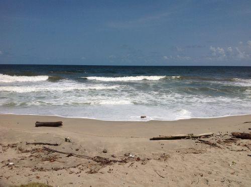 drift wood beach