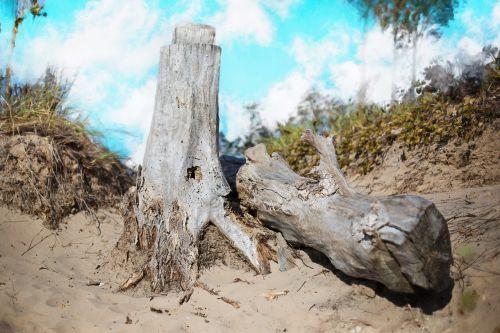 drift wood beach wood