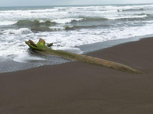 drift wood,beach,sand,sea,water,wave,sand beach,caribbean,approaching storm,landscape,coast,ocean,tree,log,wood,costa rica,tropical