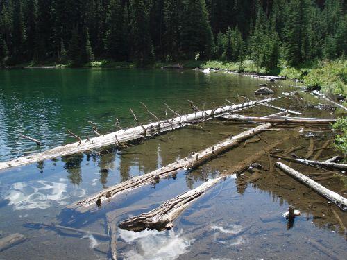 drift wood water logs