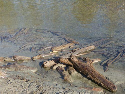 drift wood dead wood water