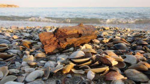 drift wood,sand,mussels,beach,wood,flotsam,sea,sand beach