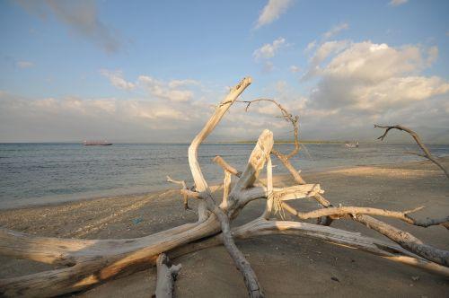 drift wood beach flotsam