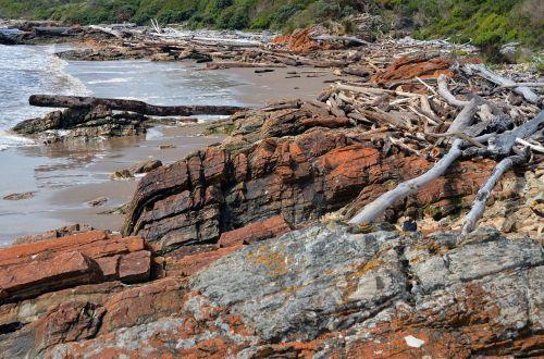 driftwood tasmania coast