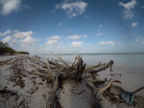 driftwood seaside beach