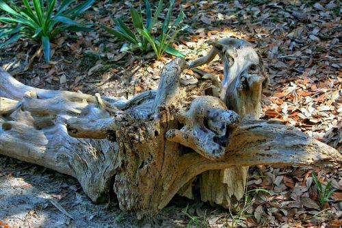 driftwood marine debris beach