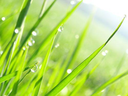 drip grass nature