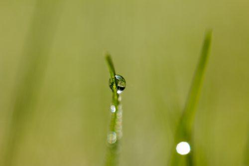 drip dew dewdrop