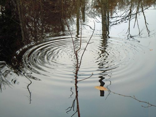 drip water surface tension