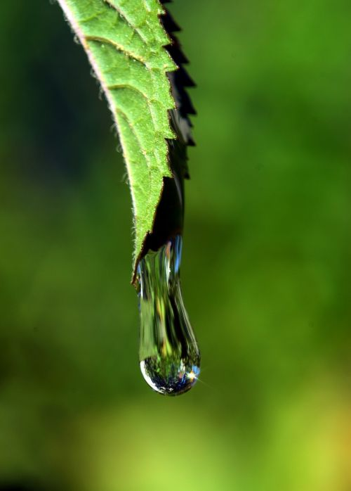 drip leaf drop of water