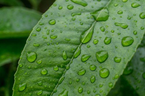 drip rain leaf