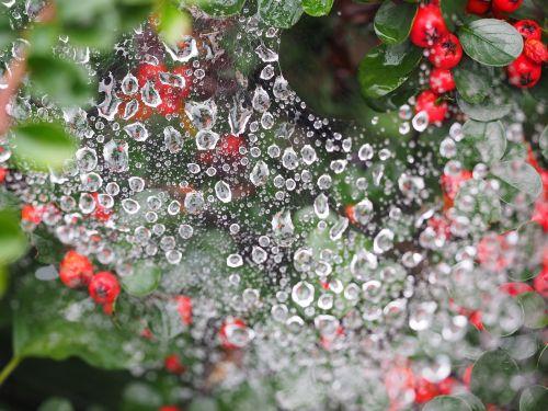 drip cobweb drop of water