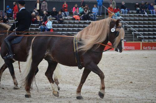 driving school horse stallion stud