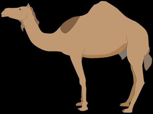 dromedary  animal  camelid