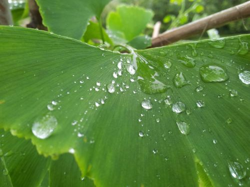 drop droplet leaf